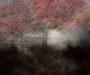 thumb-Saskia Boelsums - Landscape #109 - Courtesy Eduard Planting Gallery